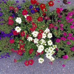 Plantas de interior y exterior - Floristeria Lucy